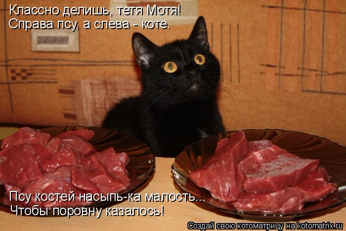 kotomatritsa_a (700x467, 248Kb)