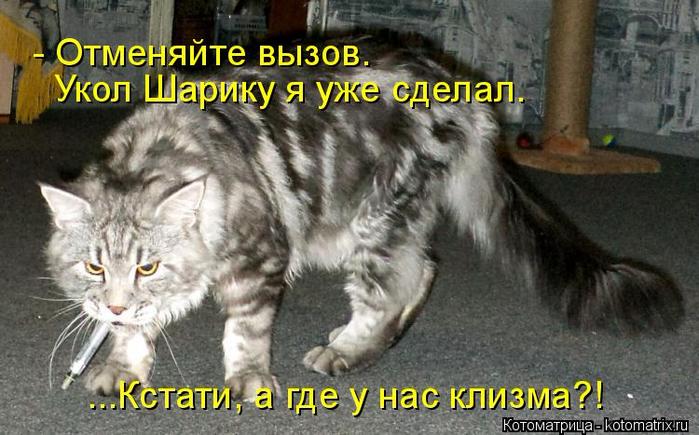 kotomatritsa_F (700x435, 330Kb)