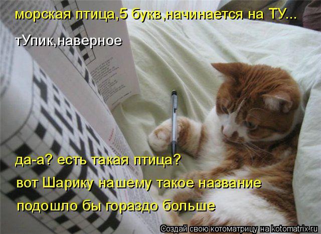 kotomatritsa_Gl (640x467, 259Kb)