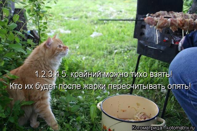 kotomatritsa_j_ (640x426, 240Kb)