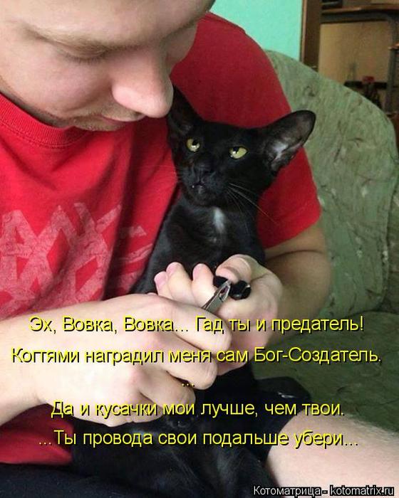kotomatritsa_l (560x700, 408Kb)