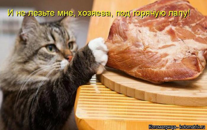 kotomatritsa_S (700x439, 319Kb)
