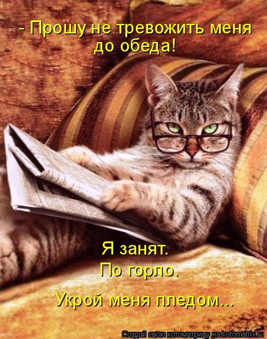 kotomatritsa_M (550x700, 468Kb)