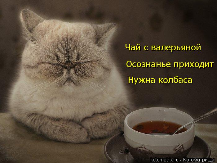 kotomatritsa_U (700x525, 203Kb)