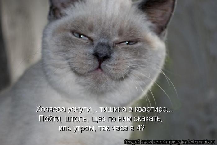 kotomatritsa_0 (700x468, 183Kb)