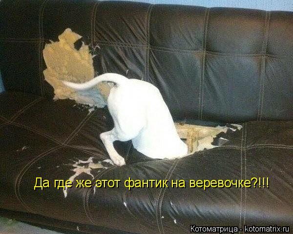 kotomatritsa_Ut (600x480, 192Kb)