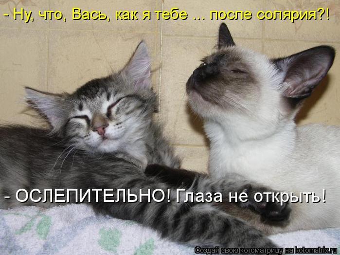 kotomatritsa_k (700x524, 325Kb)
