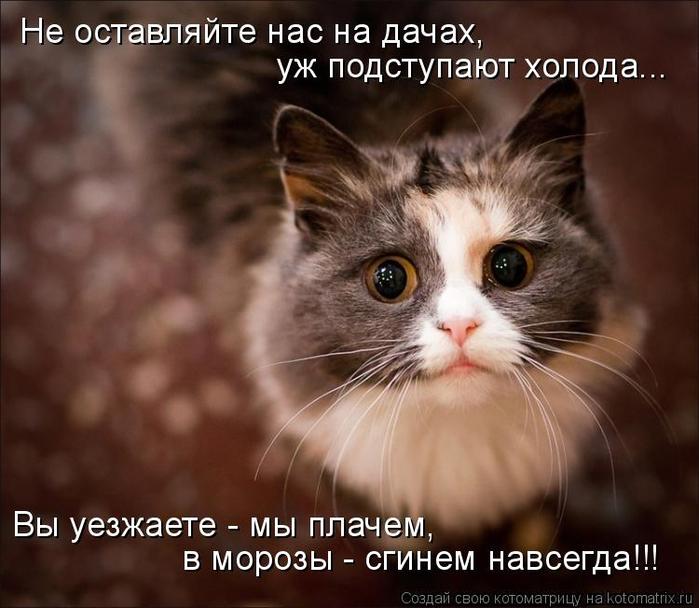 kotomatritsa_q (700x608, 330Kb)