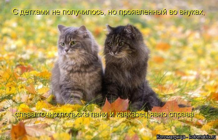 kotomatritsa_I (1) (700x451, 381Kb)