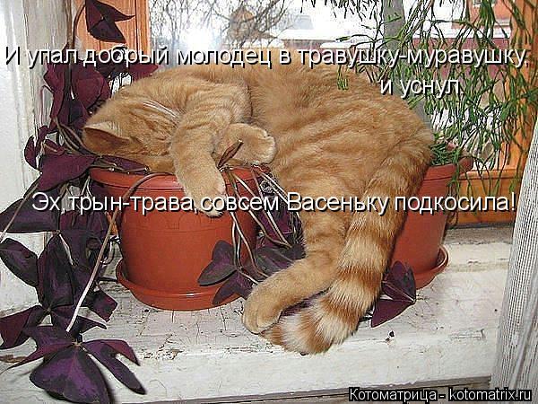 kotomatritsa_i (600x450, 292Kb)