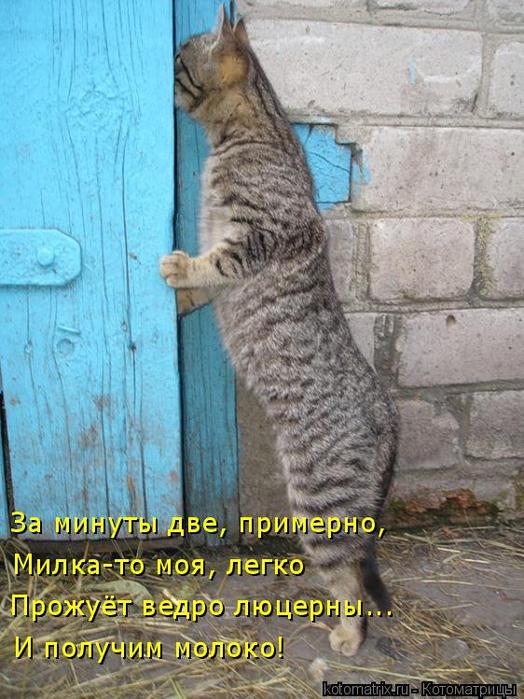 kotomatritsa_M (524x700, 413Kb)