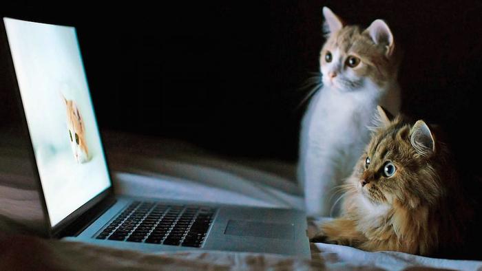 Cat-Watching-Friend-In-Laptop-Wallpaper (700x394, 205Kb)