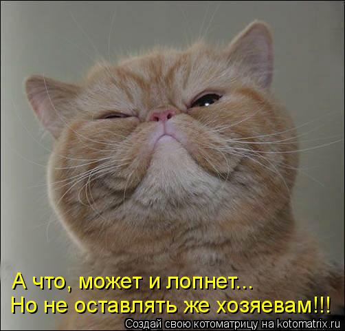 kotomatritsa_e (1) (502x481, 141Kb)