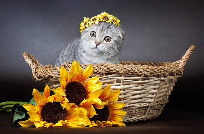 Cats_Sunflowers_Wicker_448242 (700x461, 342Kb)