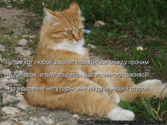 kotomatritsa_H (700x524, 407Kb)