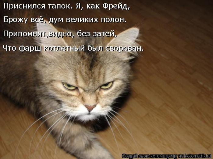 kotomatritsa_L (700x524, 300Kb)