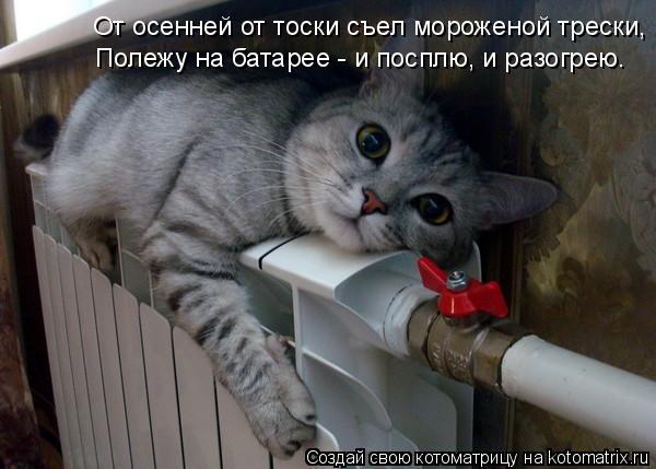 kotomatritsa_an (600x429, 148Kb)