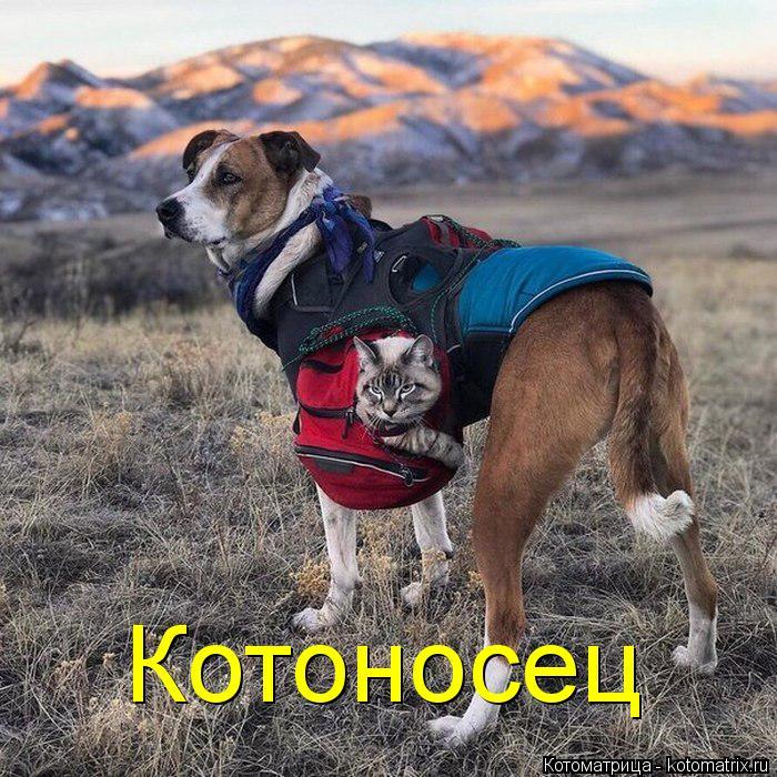 kotomatritsa_c (700x700, 431Kb)