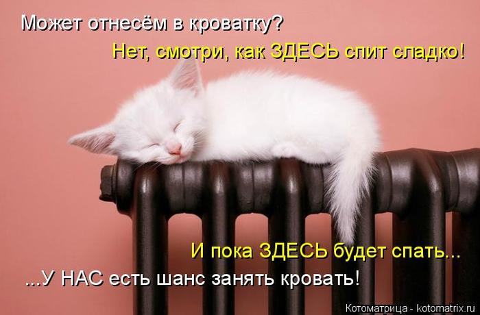 kotomatritsa_vp (700x460, 251Kb)