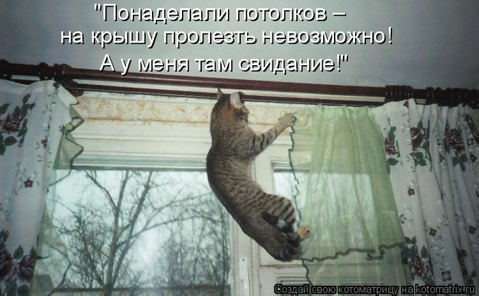 kotomatritsa_Vr (700x432, 279Kb)