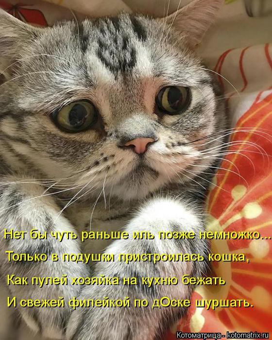 kotomatritsa_J_ (560x700, 461Kb)