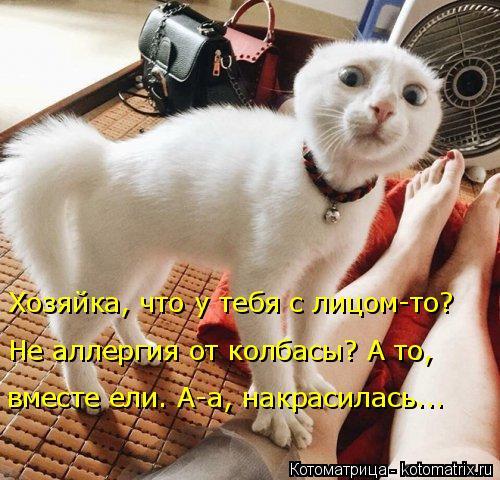 kotomatritsa_S (1) (500x480, 236Kb)