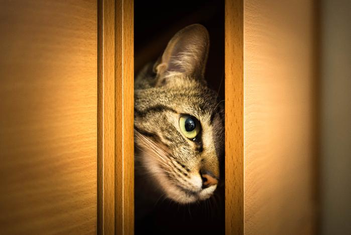 кошка-выглядывает-из-шкафа (700x467, 314Kb)