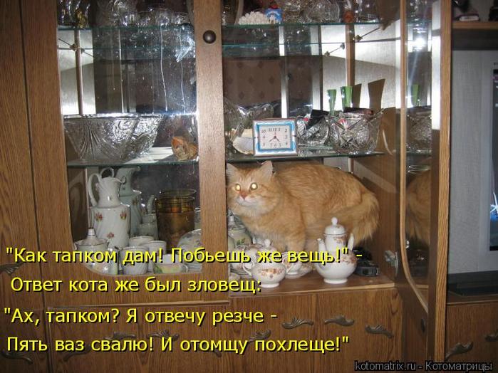 kotomatritsa_8w (700x524, 420Kb)