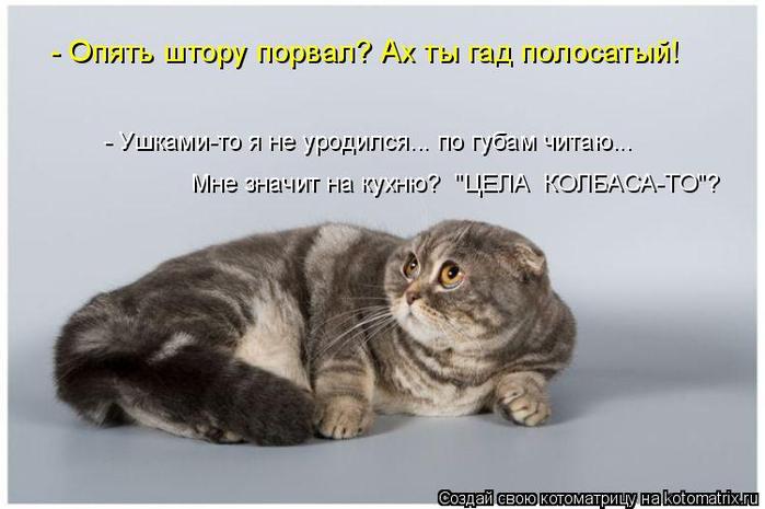 kotomatritsa_U (700x465, 208Kb)