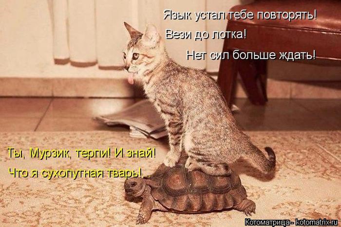 kotomatritsa_V (700x467, 363Kb)