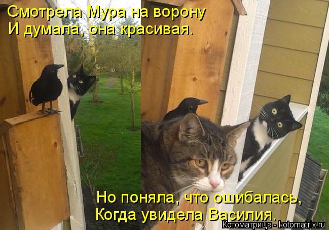 kotomatritsa_Z (649x453, 244Kb)