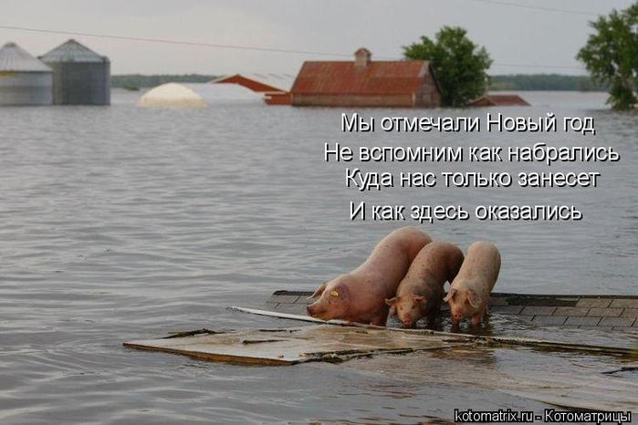 kotomatritsa_8 (700x466, 254Kb)