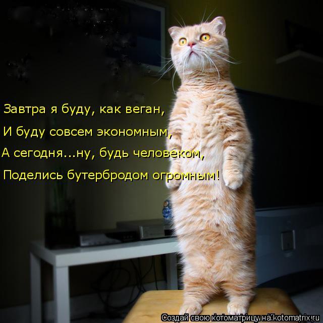 kotomatritsa_o (640x640, 222Kb)
