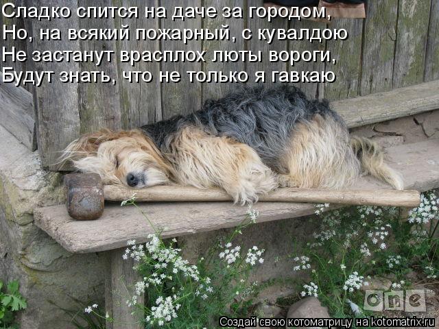 kotomatritsa_z (640x480, 250Kb)