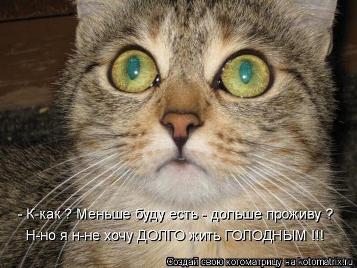 1285285875_kotomatrix-15 (700x525, 78Kb)