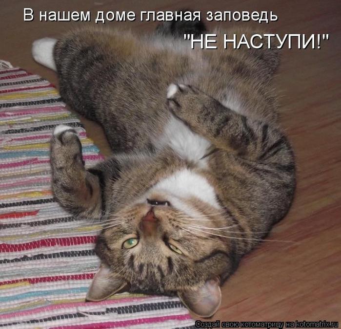 1383990268_kotomatricy-13 (700x673, 422Kb)