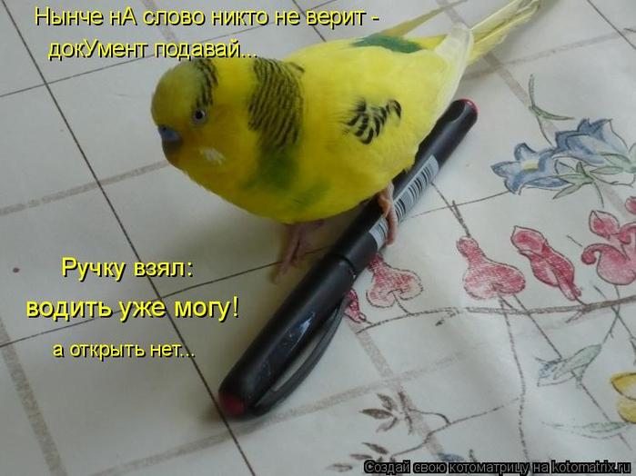 kotomatritsa_3 (700x524, 305Kb)