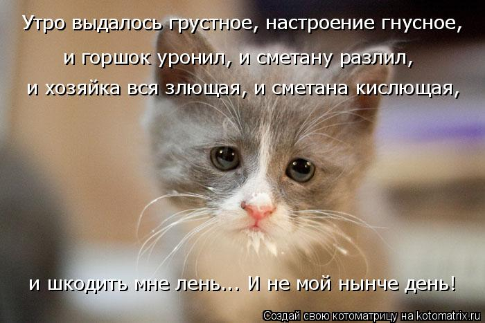 kotomatritsa_c (1) (700x467, 219Kb)