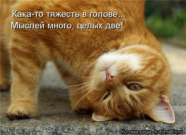 kotomatritsa_G (604x438, 203Kb)