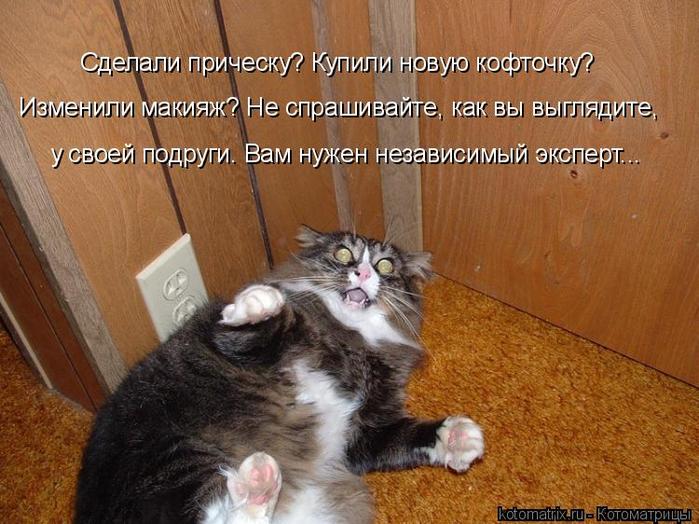 kotomatritsa_Kk (700x524, 413Kb)