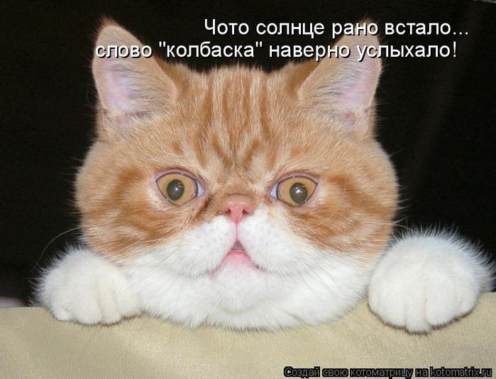kotomatritsa_o (700x535, 314Kb)