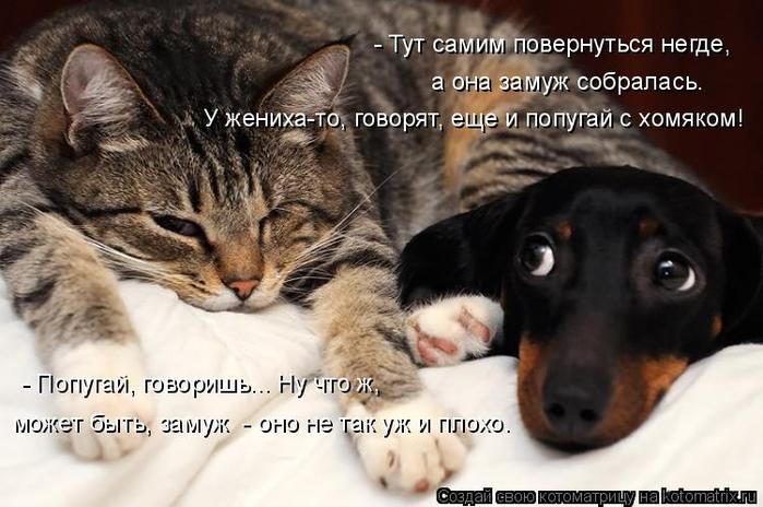 kotomatritsa_r (700x464, 307Kb)