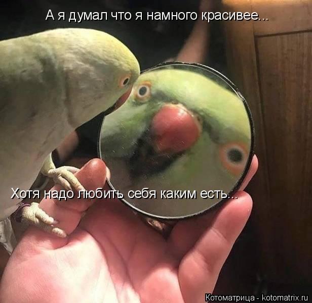 kotomatritsa_SH (616x600, 182Kb)