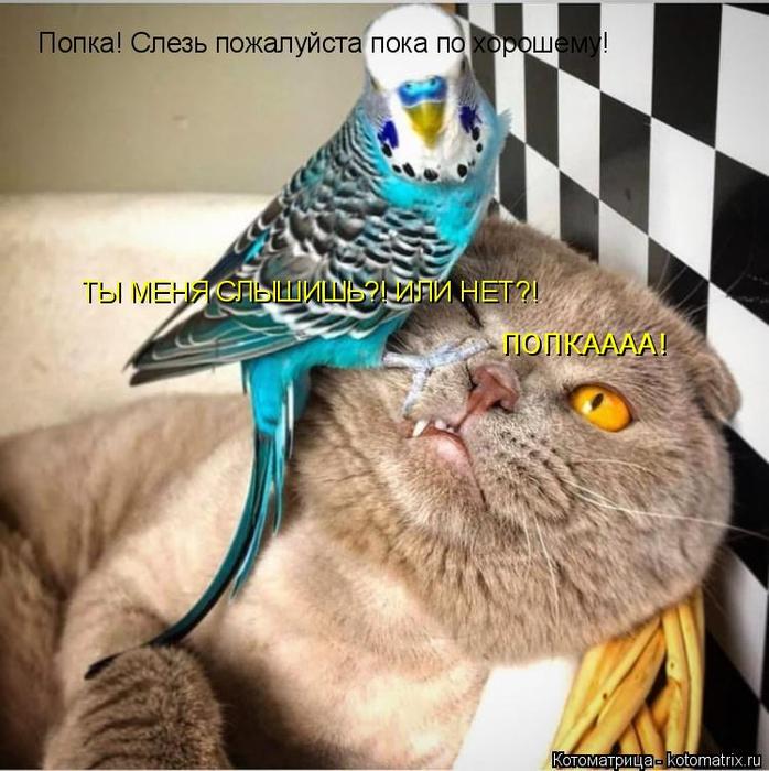 kotomatritsa_tQ (698x700, 412Kb)