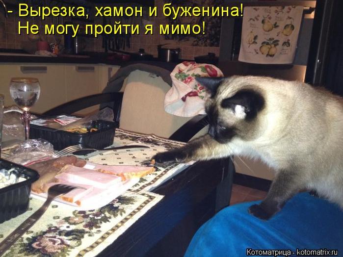 kotomatritsa_w (700x524, 382Kb)
