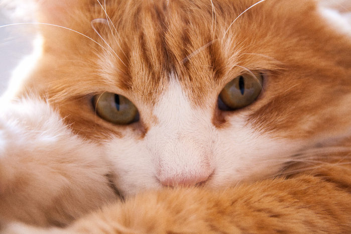 Cats_Closeup_Macro_Eyes_Ginger_color_Glance_Snout_516925_3888x2592 (700x466, 394Kb)