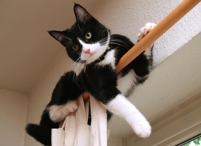 cat-on-curtain-rod (700x508, 77Kb)