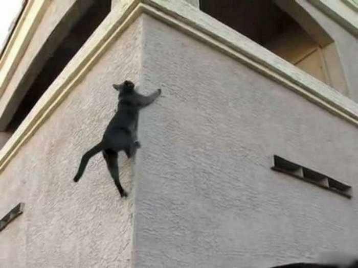 rock-climber-cat-04 (700x525, 26Kb)