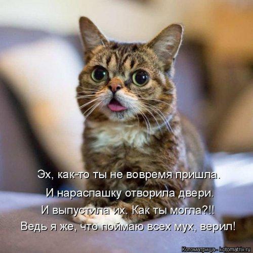 1561744839_kotomatrica-33 (500x500, 166Kb)