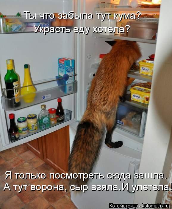 kotomatritsa_N (578x700, 265Kb)